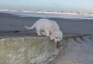 Balou på stranden